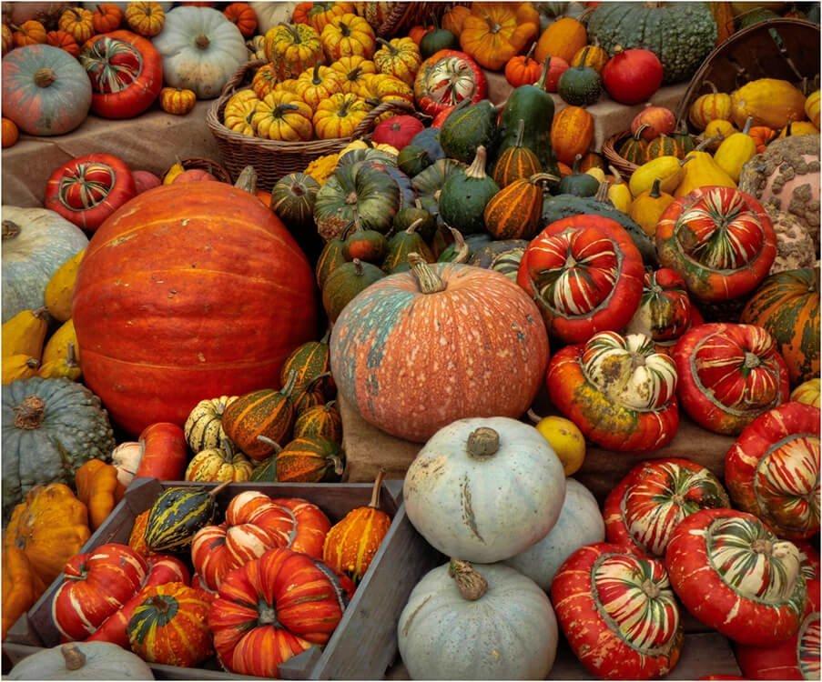 Photocraft Camera Club - Autumn Harvest by Gillian M