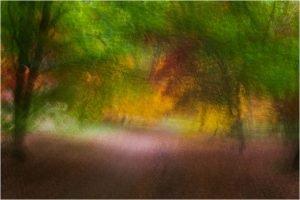 Photocraft Camera Club - Autumn Movement by Brian C