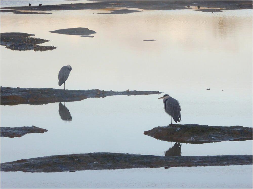 Photocraft Camera Club - Beddington Wetlands by Geoff N