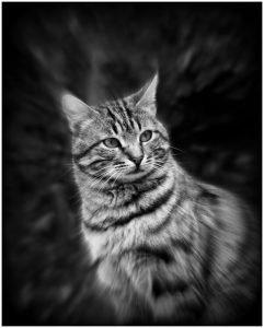 Photocraft Camera Club - Top Cat by Alan M