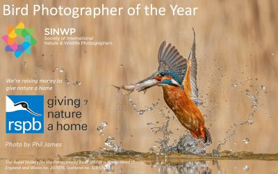 SINWP – Bird Photographer of the Year Competition