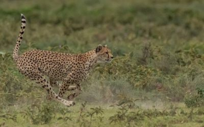 Capturing Movement -Wildlife and Sport