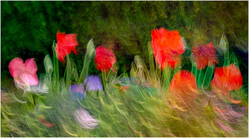 Photocraft Camera Club - FLOWERS IN THE BREEZE by Brian C