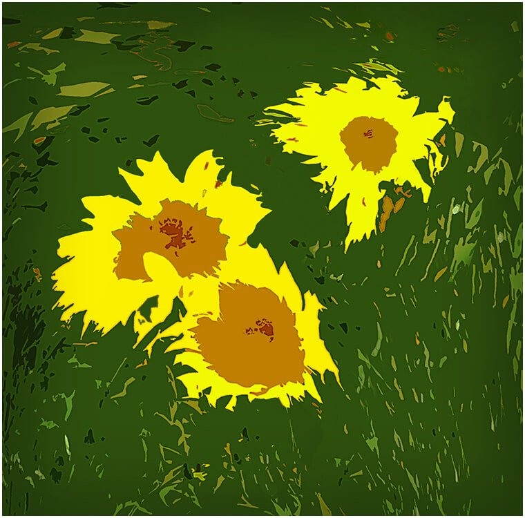 Photocraft Camera Club - SUNFLOWERS by Dave S