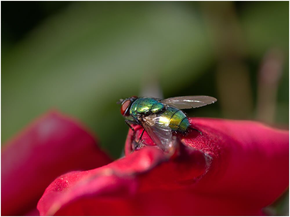 Photocraft Camera Club - THE FLY by Neil G