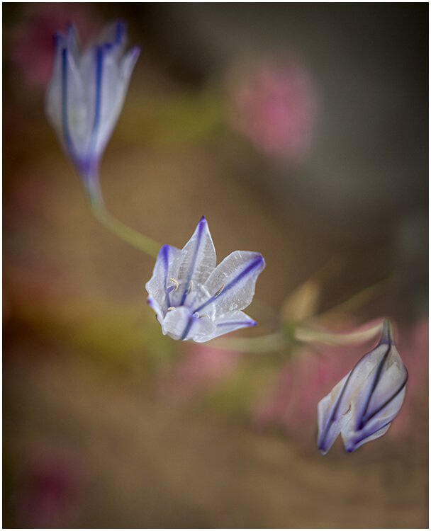 Photocraft Camera Club - Growing In All Directions by Brian C