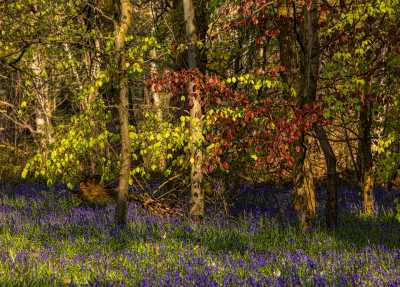 Banstead Woods May 2021 67 Edit